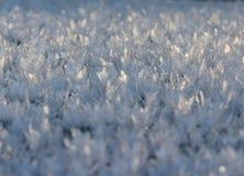 Mirakel- bakgrund för vinter Royaltyfria Foton