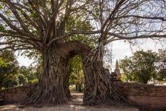 Mirakel`-nyckeln till passagen av tid` på fördärvar av Wat Phra NgamWat Cha Ram, Phra Nakorn Si Ayutthaya, Thailand Arkivfoton