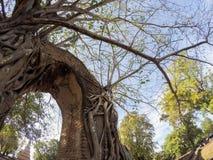Mirakel`-nyckeln till passagen av tid` på fördärvar av Wat Phra NgamWat Cha Ram, Phra Nakorn Si Ayutthaya, Thailand Arkivbilder