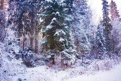 Mirakelvinterskog som täckas av snö Arkivbild