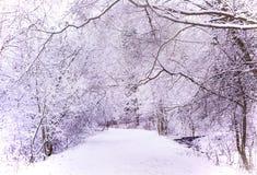 Mirakelvinterskog som täckas av snö Royaltyfri Bild