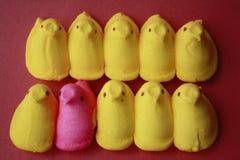 Miran furtivamente los polluelos un color de rosa en una fila del amarillo