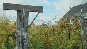 Miranda Vineyard (2 of 8). A view or scene of Wine stock footage