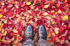 Mirando abajo los zapatos, hojas otoñales coloridas en la tierra, concepto del otoño Fotografía de archivo