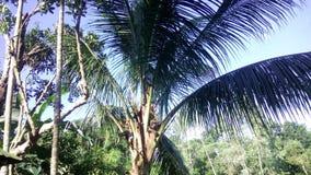 Mirando hermoso un árbol de coco imagen de archivo libre de regalías