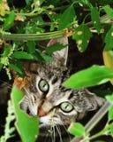 Mirar a escondidas el gato imagenes de archivo