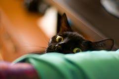 Mirar a escondidas el gato negro Fotografía de archivo libre de regalías