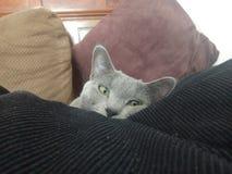 Mirar a escondidas Kitty Foto de archivo libre de regalías
