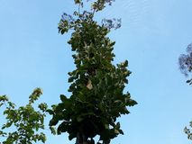 Mire el árbol verde en un cielo azul hermoso imágenes de archivo libres de regalías