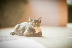 Mire el gato Imágenes de archivo libres de regalías