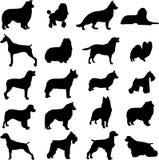 Mire el perro famoso stock de ilustración