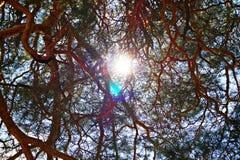 Mire el sol Fotos de archivo