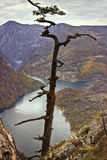 Mire en el río Drina Imagen de archivo libre de regalías