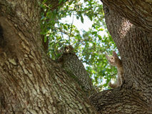 Mire a escondidas un gatito del abucheo Imagen de archivo libre de regalías