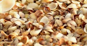Mire la cubierta de conchas marinas en costa de mar en macro almacen de video
