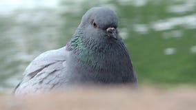 Mire los ojos de palomas por el agua