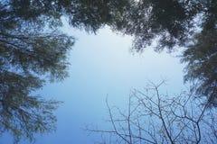 Mire para arriba al cielo Fotos de archivo libres de regalías