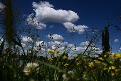 Mire para arriba el cielo es azul foto de archivo