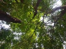 Mire para arriba en el bosque fotografía de archivo libre de regalías