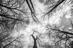 Mire para arriba en el cielo fotos de archivo libres de regalías