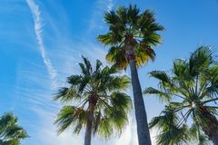 Mire para arriba la palmera alrededor de Laguna Beach imágenes de archivo libres de regalías
