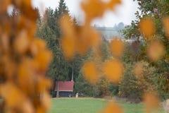 Mire a través de las hojas amarillas una cabina fotos de archivo libres de regalías
