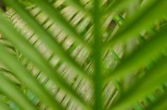Mire a través de las hojas verdes borrosas en las hojas verdes Fotos de archivo
