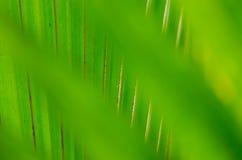 Mire a través de las hojas verdes borrosas en las hojas verdes Fotografía de archivo