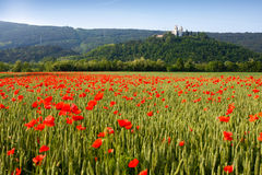 Miren Castle and poppy field Stock Image