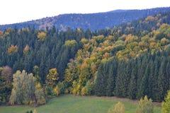 Miriam skog Arkivfoto