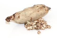 Mirifica ή άσπρο Kwao Krua Pueraria (ταϊλανδικό όνομα) Στοκ Εικόνα