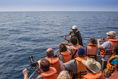 Mirissa是有最大的蓝鲸的地方 免版税库存照片