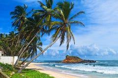 Mirissa beach. Palm tree in the idyllic Mirissa beach, Sri Lanka Stock Photography
