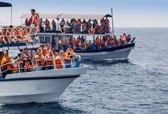 Mirissa est l'endroit qui a la plus grande baleine bleue Photos stock