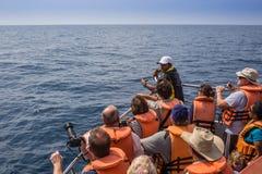 Mirissa jest miejscem który dużego błękitnego wieloryba Zdjęcia Royalty Free