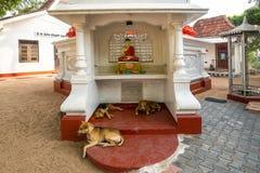 MIRISSA, SRI LANKA - Januari 11, 2017: Het standbeeld van Boedha bij de temperaturen Stock Afbeelding