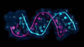 Free MiRNA-mRNA Interaction Royalty Free Stock Image - 96098106