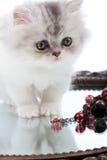 miroir de chaton photographie stock libre de droits