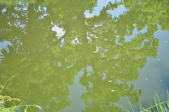 Miroir en bois de l'eau Photo stock