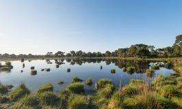 Miroir naturel pendant la saison d'été Image libre de droits