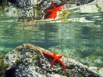 Miroir rouge d'étoiles de mer Image stock