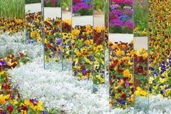Miroirs dans le jardin Photo libre de droits
