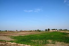 Village with houses surrounded by farmland near Mirpurkhas Sindh Pakistan. Mirpurkhas, Pakistan - January 19, 2017: A small village consisting mainly of farm royalty free stock images