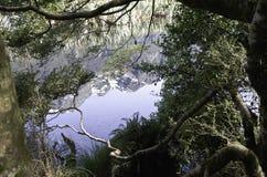 Mirror湖在峡湾国家公园 美丽的新西兰 免版税图库摄影