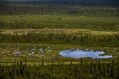 Mirror湖在绿色沼泽 图库摄影