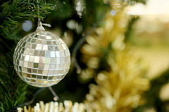 Mirror ball decorate hanging on green pine tree for Christmas festival Royalty Free Stock Images