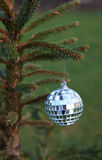 Mirror ball hanging on a Christmas tree branch Stock Photography