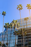 A mirror building on the Hollywood Boulevard against the blue sk. Y. Palm trees Stock Image