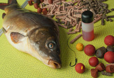 Mirror carp, bait and fishing tips on a folding ta Stock Photos