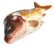 Mirror Carp Royalty Free Stock Photo
